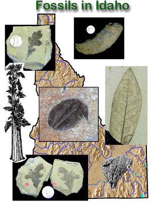 Fossils in Idaho